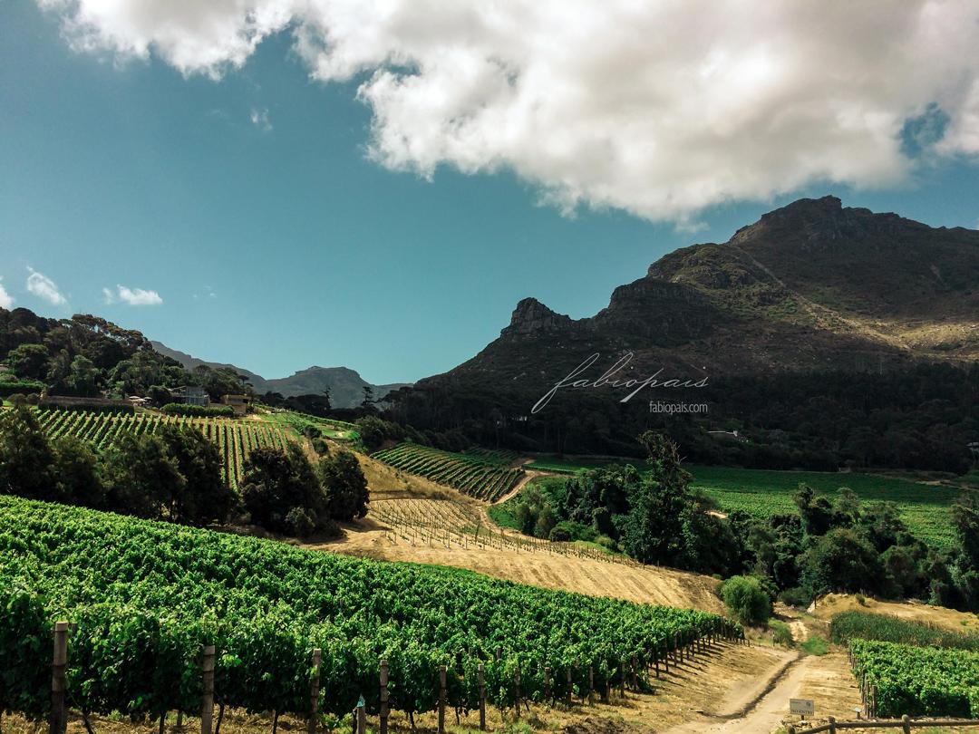 Western Cape Wine Farms