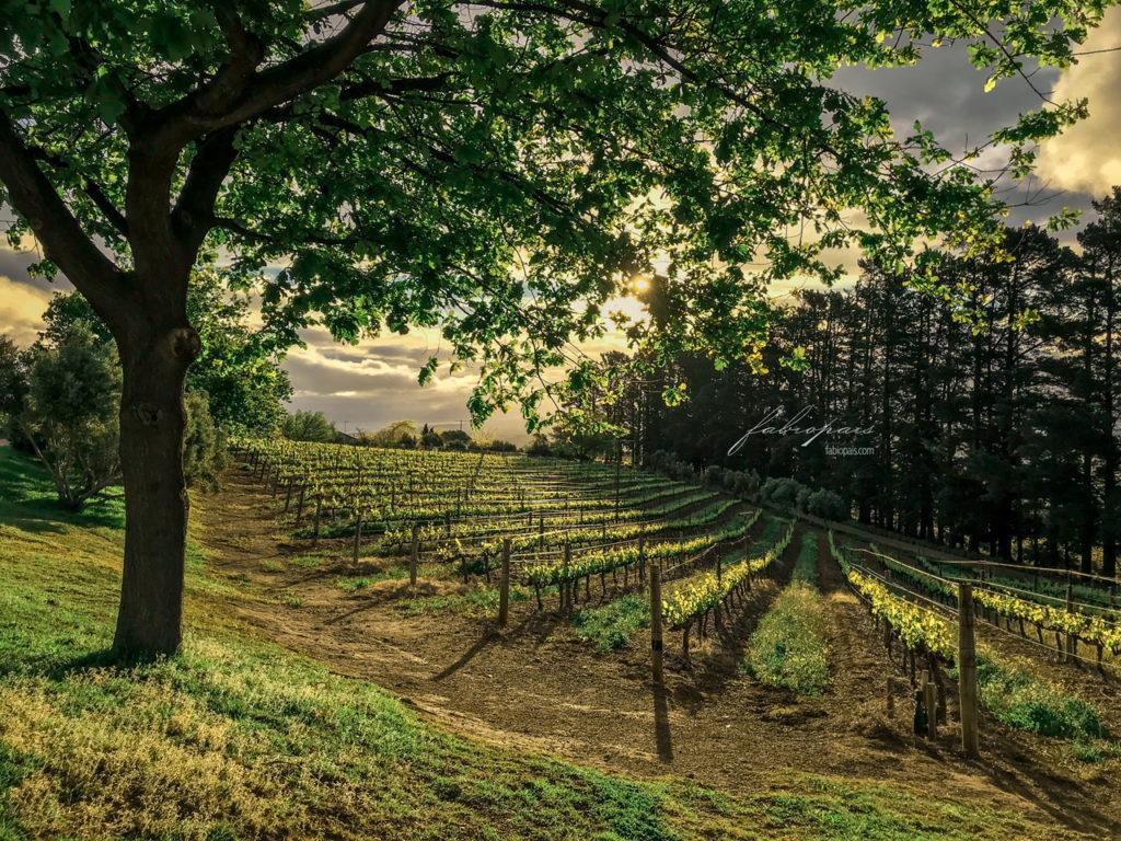 Uva Mira Wine Estate Sommerset West